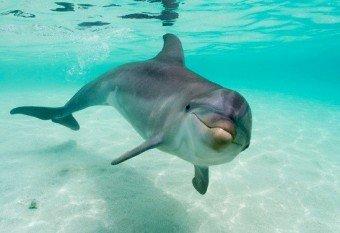 alquilerbarcodelfin-e1292523266779.jpg.Navegar junto a delfines