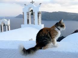 gato.jpg.El gato se lleva bien con los barcos y con Grecia