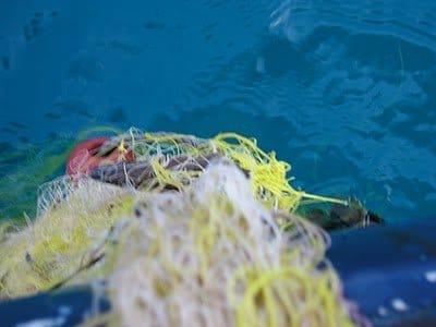 tortuga.jpg.Mi pequeña regata en solitario. El Jónico