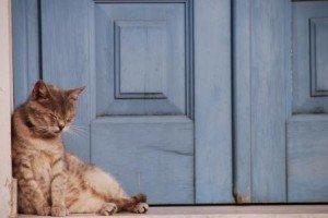 DSC_0340.jpg.Curiosidades en Grecia. Los gatos griegos